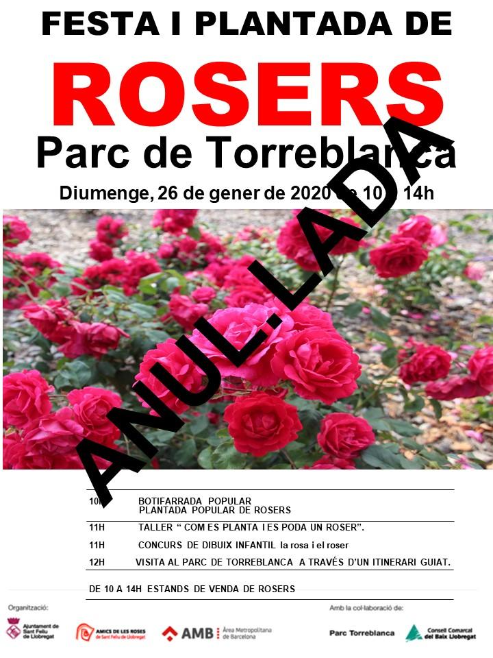 ANULACIO 2 plantada popular de rosers 2020