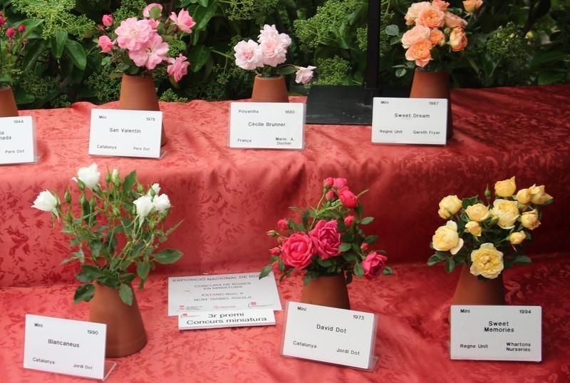 roses 2016 dissabte matí 190