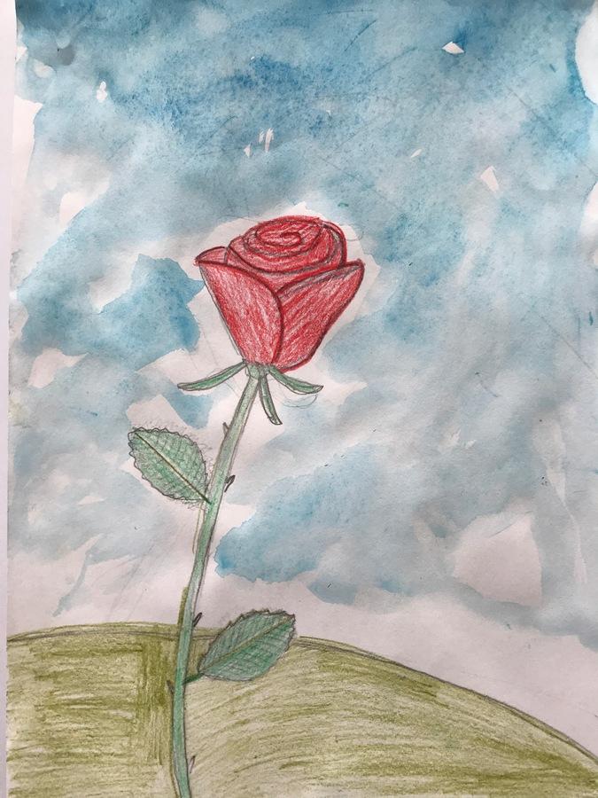 Joaquim 9 Anys Roses I Rosers Esc. Mestral