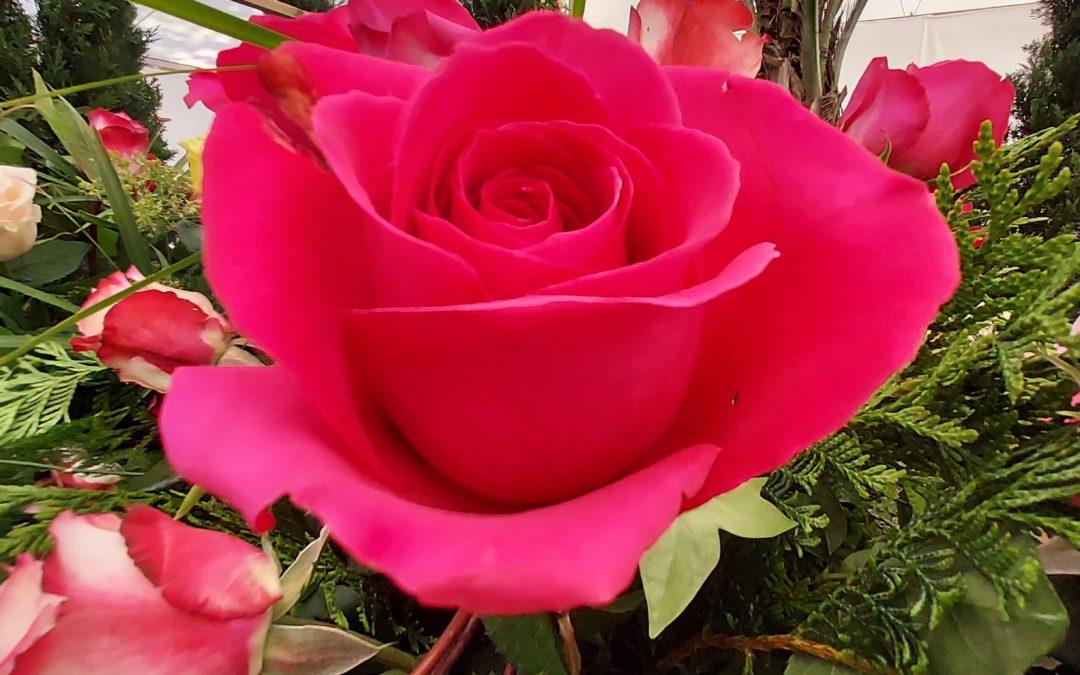 Últims retocs a l'Exposició Nacional de Roses